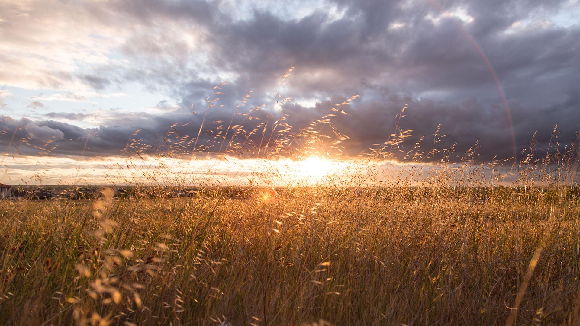 green-grass-field-at-sunset